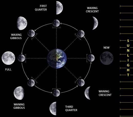 The principal lunar phases are new moon, first quarter moon, full moon ...